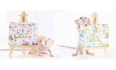 Penuh Bakat, 10 Potret Karya Lukisan Para Tikus yang Laku Terjual