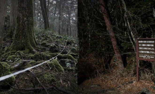 Hutan Aokigahara, Tempat Misterius di Jepang yang Sering Jadi Lokasi Bunuh Diri