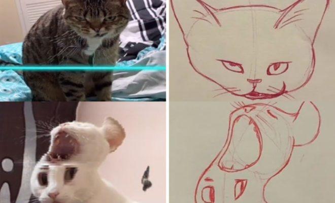 10 Potret Kucing Korban Scan Filter di Tik Tok yang Bikin Tertawa Ngakak