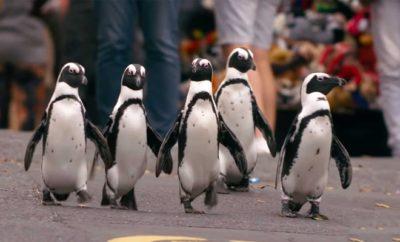 Sinopsis Penguin Town, Ketika Sekelompok Penguin Berbaur dengan Warga Kota
